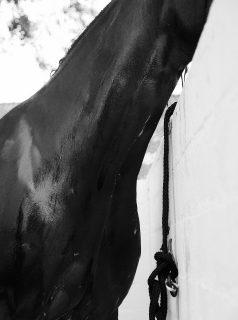 Quarter Horses with Adrienne Jüliger